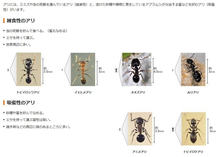 雑食性のアリ・吸蜜性のアリ